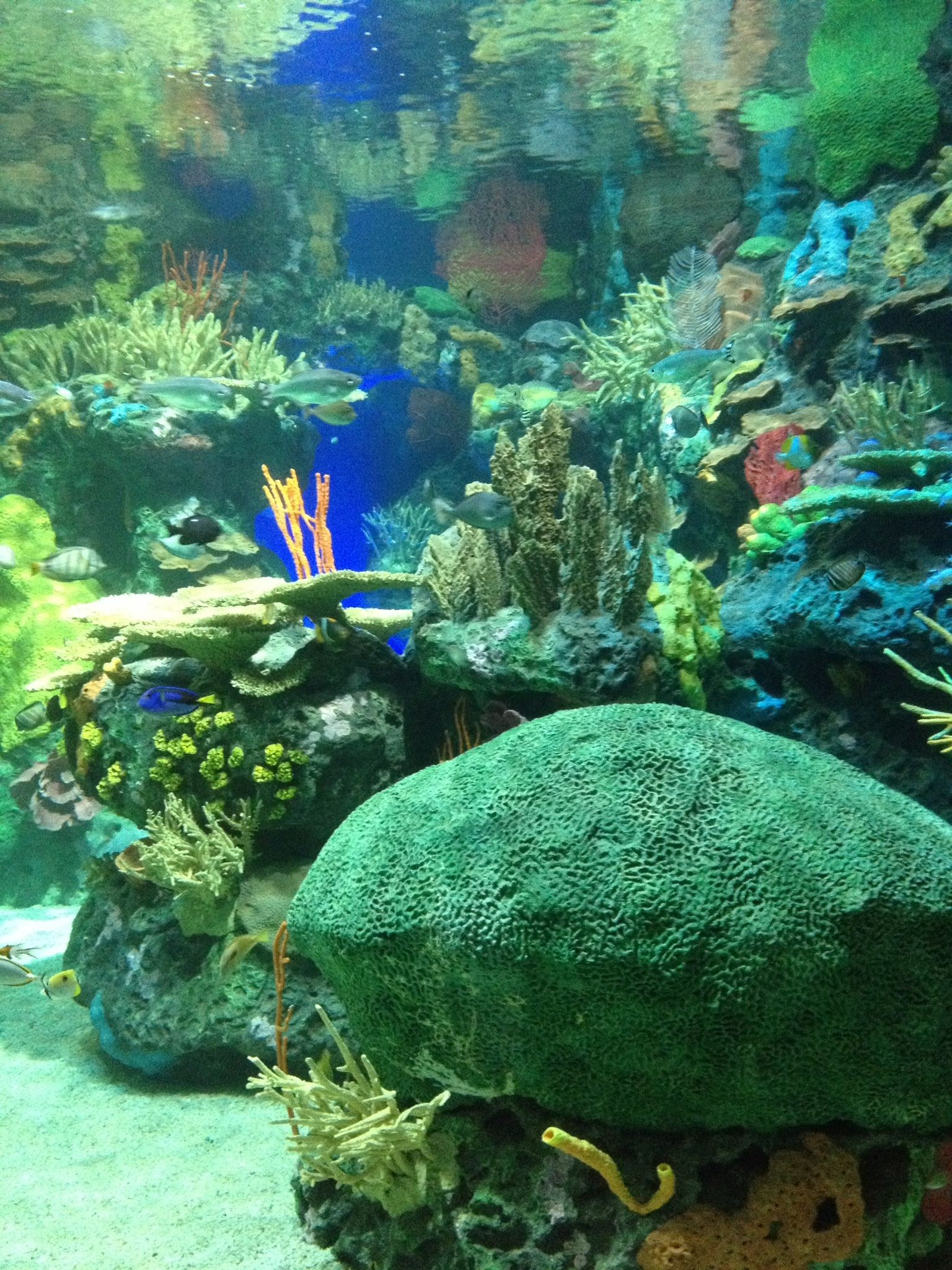 Our Experience At Ripley S Aquarium Of Canada
