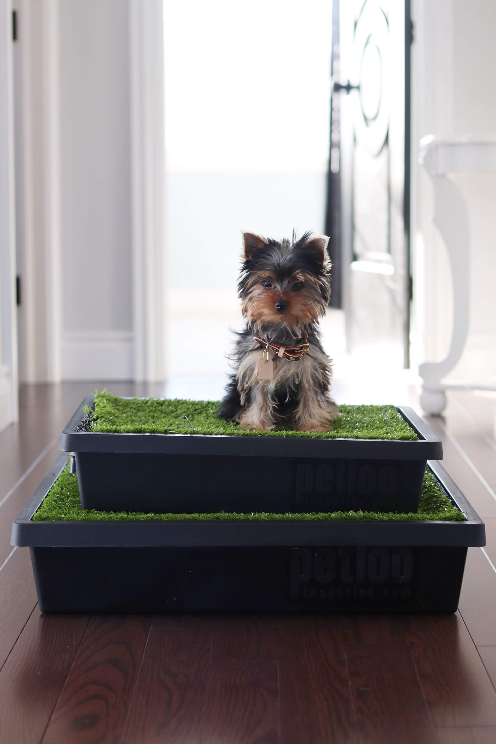 Puppy Training with the Pet Loo Portable Pet Toilet!